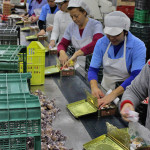 Polvorones factory workers