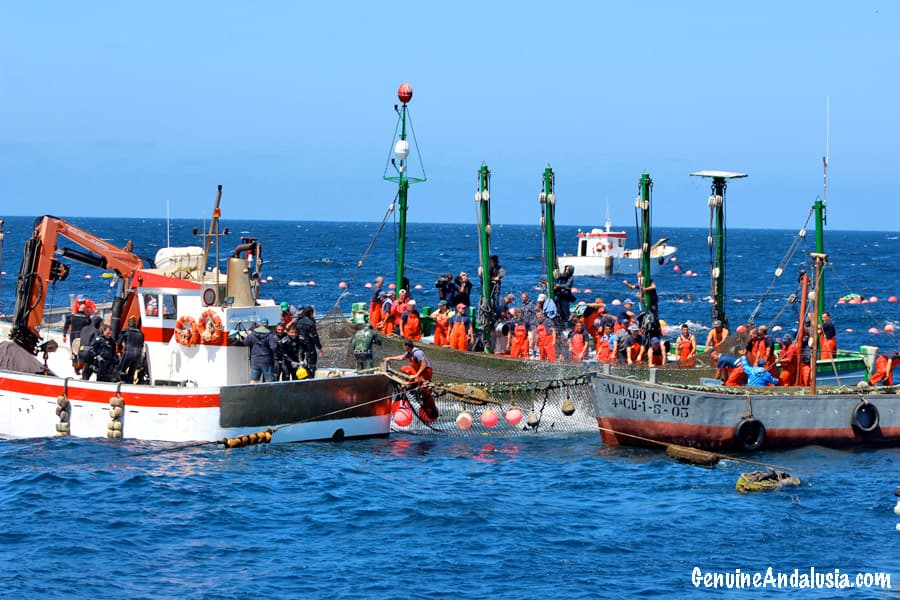 Fishing boats of La Almadraba in Barbate. Red Tuna Fishing in Cadiz, Spain