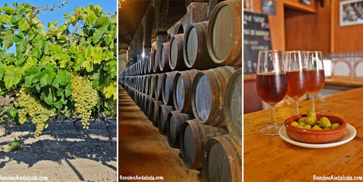 Sherry vines, Sherry casks and Sherry glasses. Imagery of the Sherry Triangle, Southern Spain