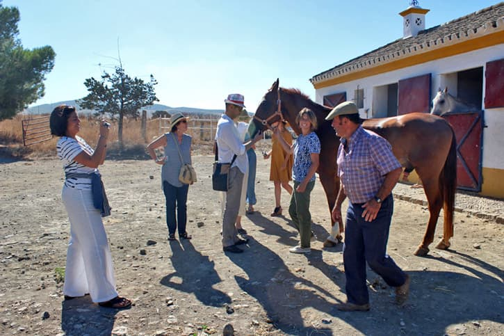 Visiting a farm of Spanish purebred horses during a friends trip to Spain