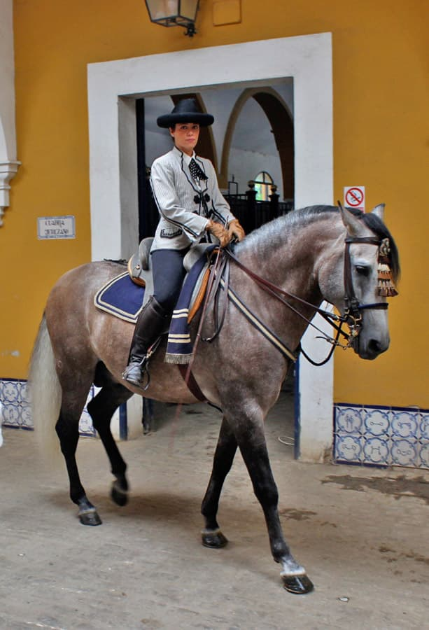Purebred horses in the Royal School of Equestrian Art in Spain