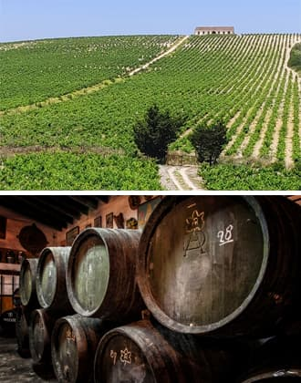 Vineyards and Sherry bodegas in the Sherry Triangle