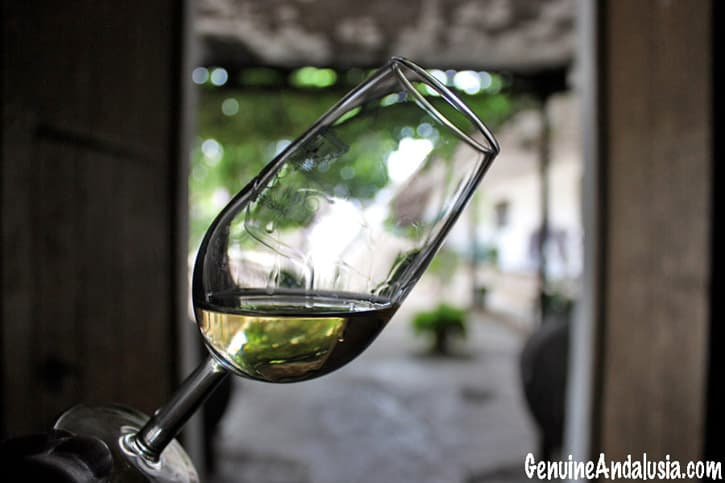 A glass of Manzanilla from the sherry triangle