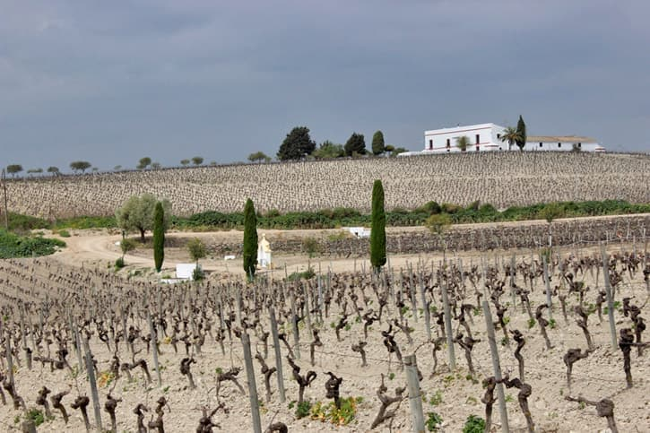 La canariera vineyard. Sherry Educator Course venue
